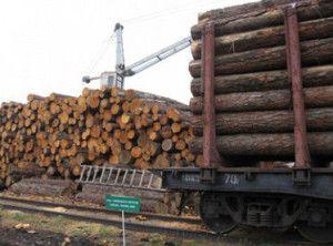 Картинка квоты на экспорт леса